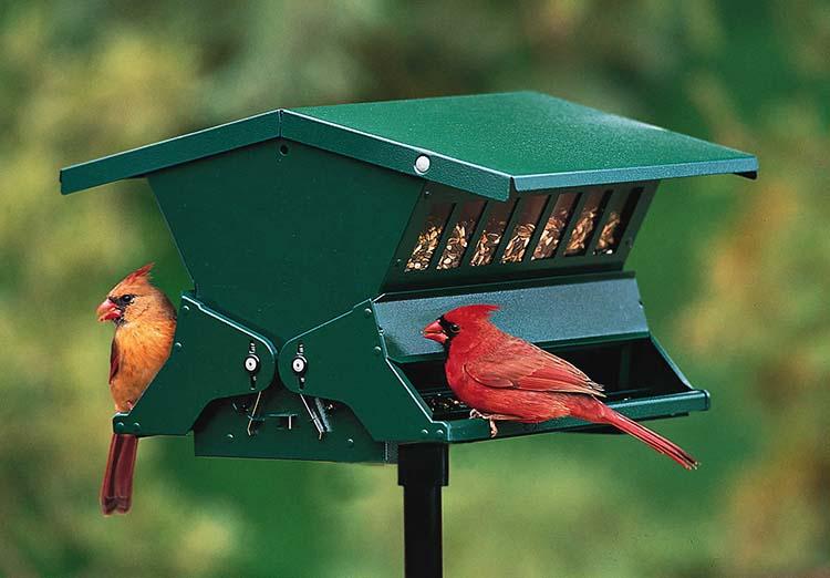 best bird feeder reviews