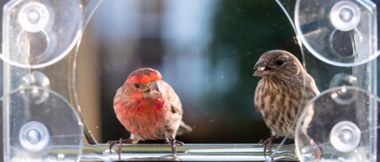 Kaytee Bird Feeders