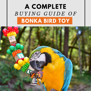 Guide Of bird toys