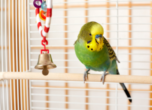 Bonka Bird Toy