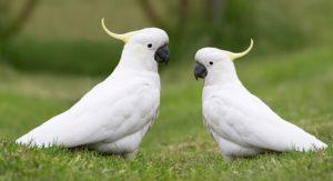 pet birds that talk